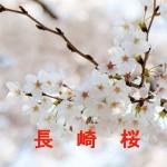 桜の開花情報 長崎