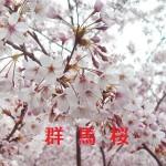 桜の開花情報 群馬