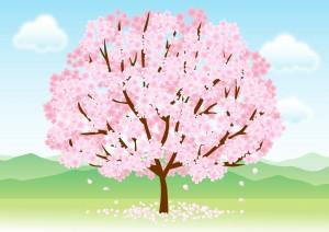 桜の満開宣言