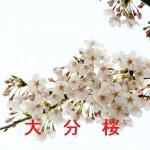 桜の開花情報 大分