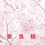 桜の開花情報 奈良