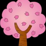 桜の開花宣言2015 宮古島