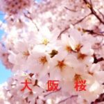 桜の開花情報 2016 大阪