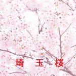 桜の開花情報 2017 埼玉 その他の桜