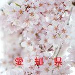 桜の開花情報 2017 愛知 その他の桜