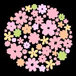 桜の開花宣言2017 甲府